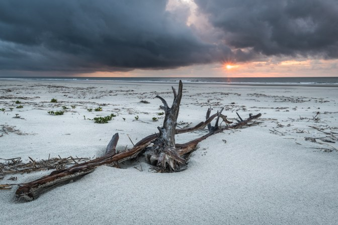 You have the beach all to yourselves on Cumberland Island