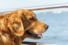 Fisher, our boat companion on the way to Cumberland Island