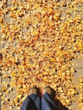 fall16_23