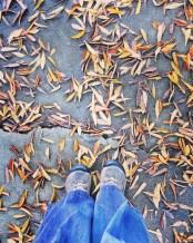 fall16_25