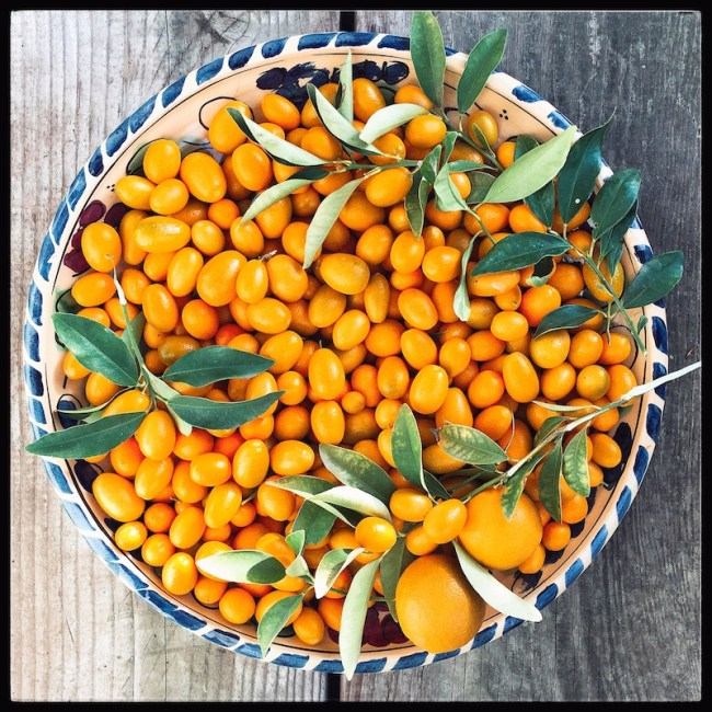 foraged_kumquats