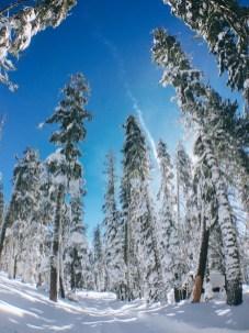 snow-winter1601