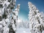 snow-winter1611