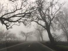 still-winter1717