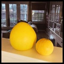 um pomelo, um grapefrui