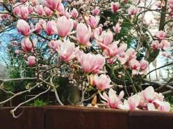 spring17_02
