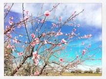 spring17_09