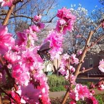 spring17_11
