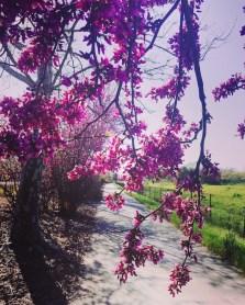 spring17_12