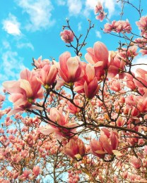 spring17_20