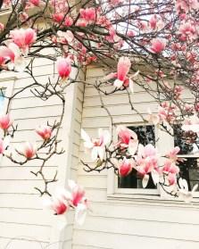 spring17_22