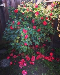 spring17_23