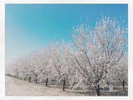 spring17_24