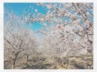 spring17_25