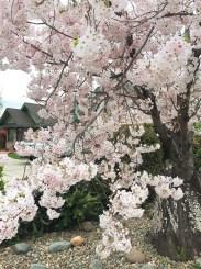 spring17_30