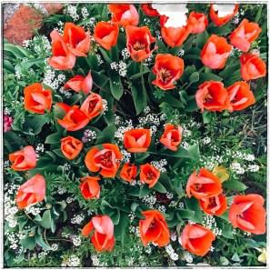 spring17_34