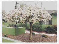 spring17_37