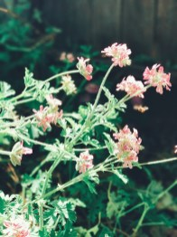 more_spring17_22