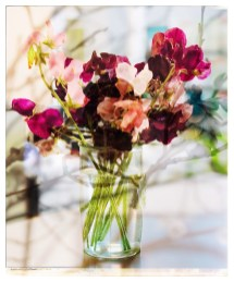 more_spring17_31