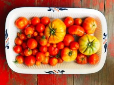 tomatos17_20