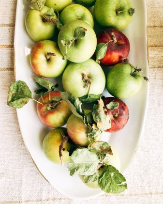 apples_and_things25