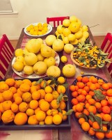 citrus-galore4JPG