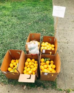 free-lemons