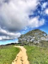 petaluma-trail_03