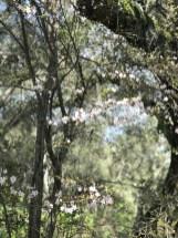 petaluma-trail_11