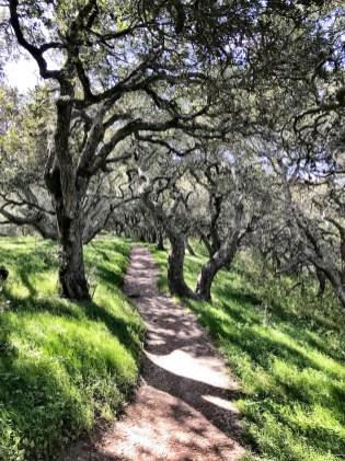 petaluma-trail_14