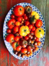 tomatoes18_1