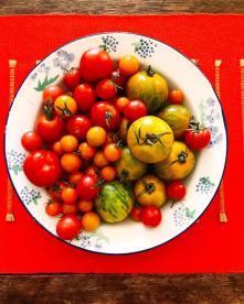 tomatoes18_3