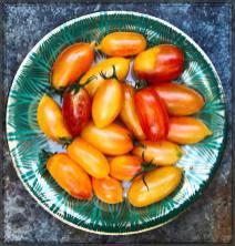 tomatoes18_4