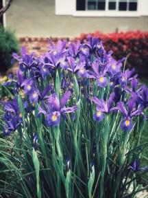 spring19-4