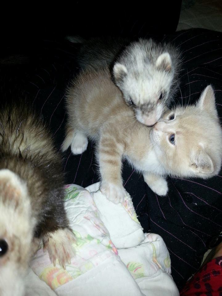 kitten1-934x