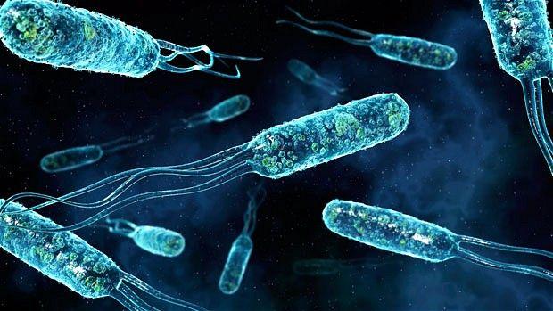 bakterii-012