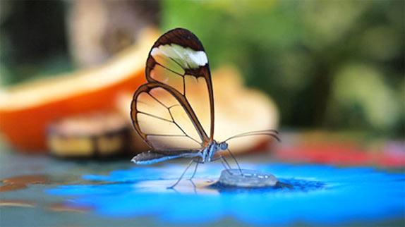 butterfly00