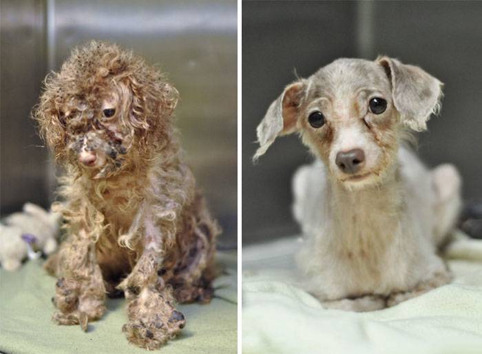 dog-makeover-before-after-rescue-18