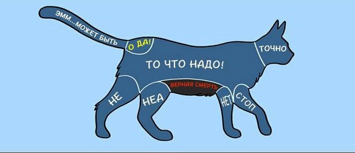 kak-nuzhno-gladit-zhivotnyx_1