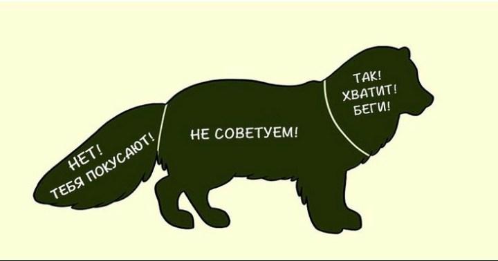 kak-nuzhno-gladit-zhivotnyx_12_1