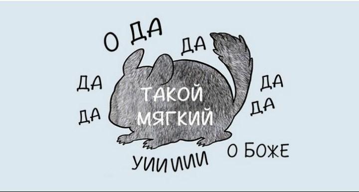 kak-nuzhno-gladit-zhivotnyx_4_1