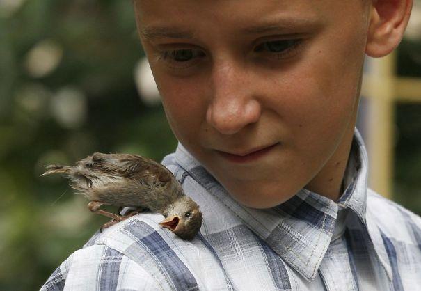 unusual-friendship-boy-sparrow-vadim-veligurov-1