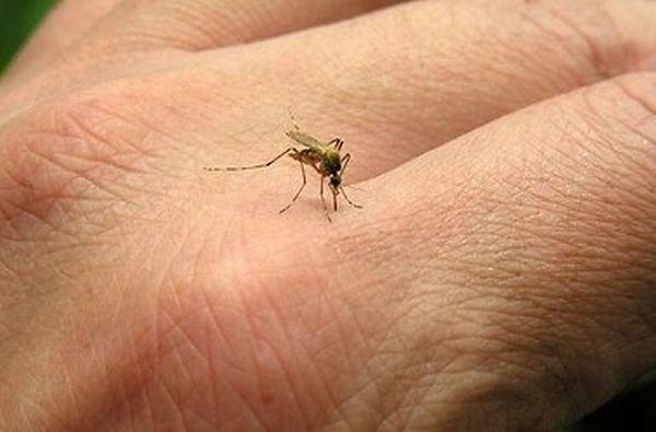 1372167498_ukus-komara
