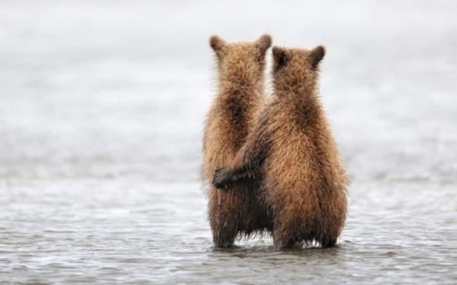 9009910-R3L8T8D-600-3149655-R3L8T8D-650-Animals-Bears-Bear-Hugs-1600x2560_result