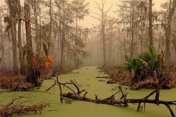 Bolota-Manchak-v-Luiziane