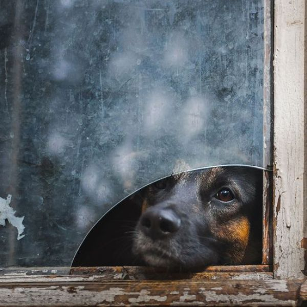 animals-looking-through-the-window-10_result
