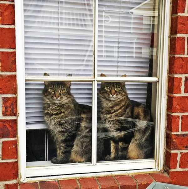 animals-looking-through-the-window-16_result