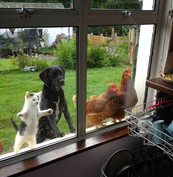 animals-looking-through-the-window-201_result