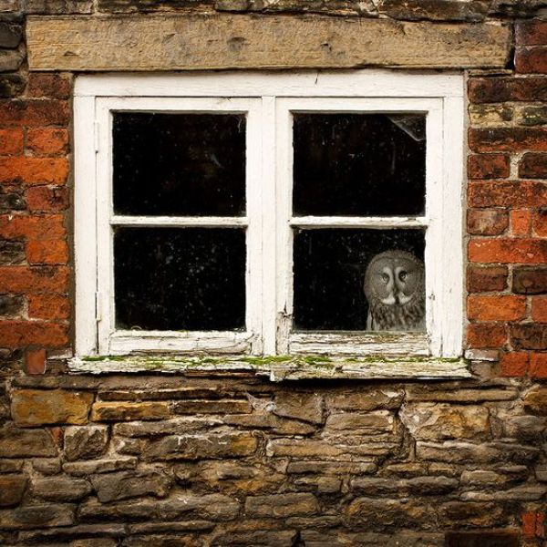 animals-looking-through-the-window-5_result
