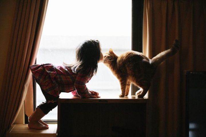 children-cat-playing-photography-14_result
